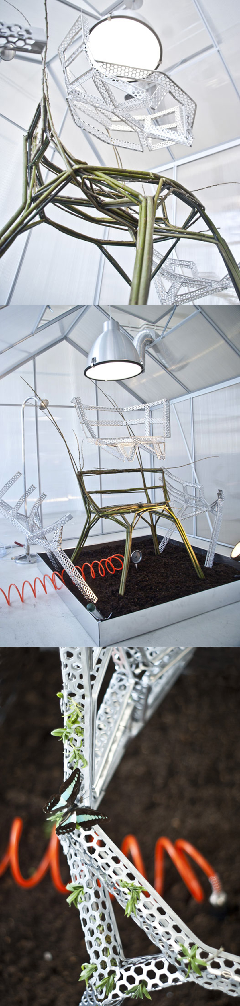 planting a chair